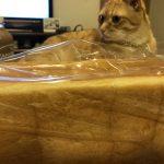 ヴィヴォの食パン